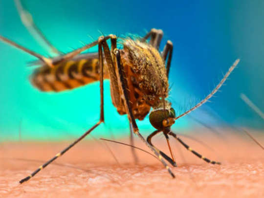 dengue-patients