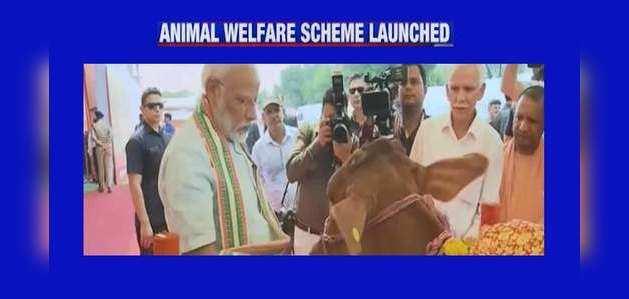 मथुरा: पीएम नरेंद्र मोदी ने पशुओं के लिये लॉन्च की कल्याण योजना