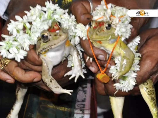 Frog-marriage-for-rain