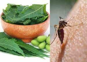 Dengue से लड़ने में मददगार नीम, ऐसे करें यूज