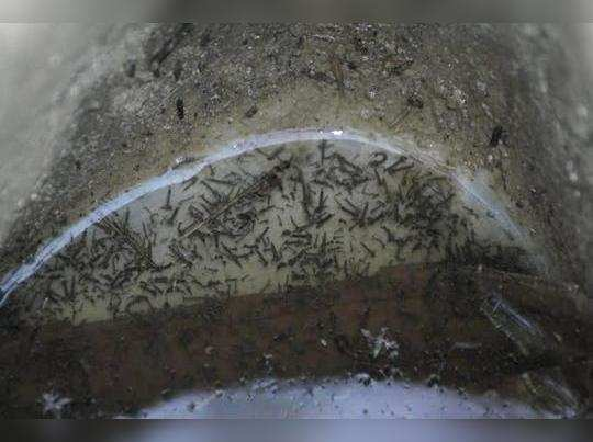 maccharanmule malaria Che sawat