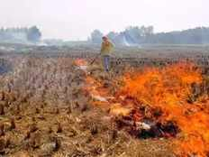 हाईकोर्ट ने पराली जलाने वाले किसानों से जुर्माना वसूलने पर लगाई रोक