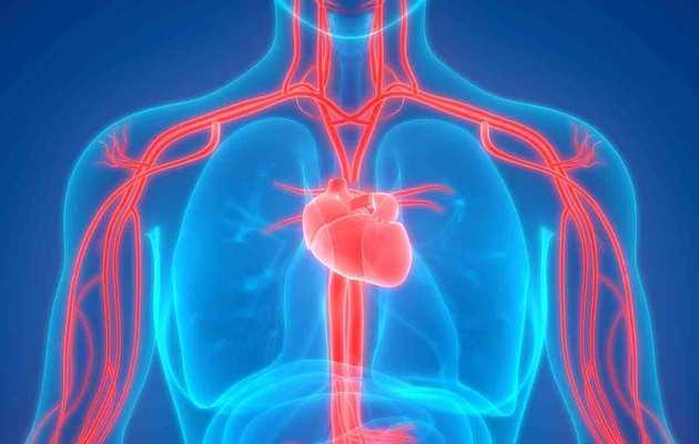 Arteries के लिए फायदेमंद हैं ये 10 सुपरफूड्स