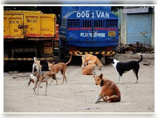 कुत्र्यांचा कायमस्वरूपी बदोबस्त करावा..
