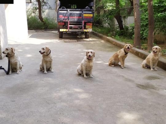 कुत्ते