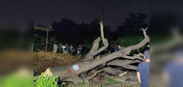 आरे: मुंबई में पेड़ काटने पर हंगामा, 29 लोग गिरफ्तार