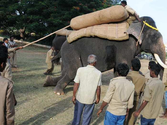 dasara-elephant jambu savari