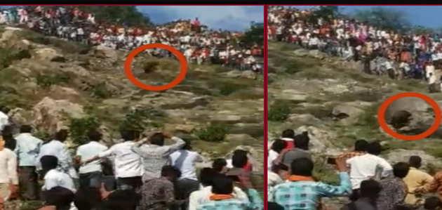 चित्तौड़गढ़ में महानवमी के अवसर पर चामुंडा देवी मंदिर में भैसे की दी गई बलि