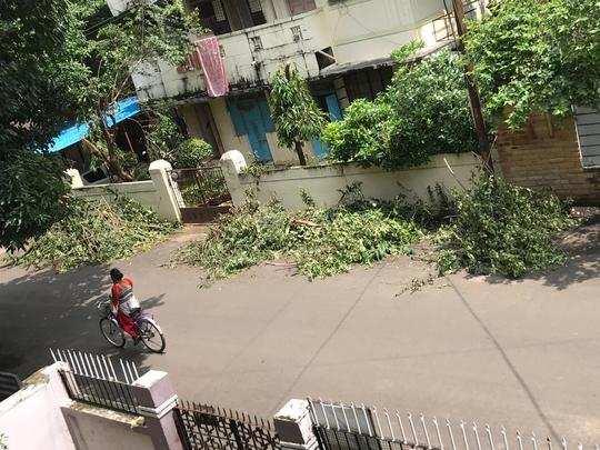 झाडांच्या फांद्या रस्त्यावर फेकल्या