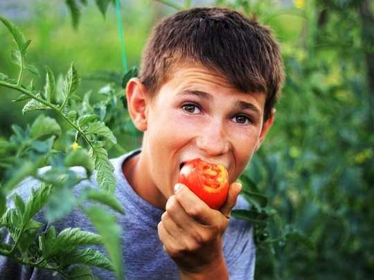 tomato eat