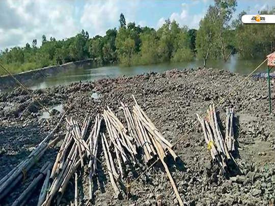 mangrove crisis
