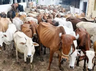 district magistrate 4 other officials in up suspended for lapses in cow protection