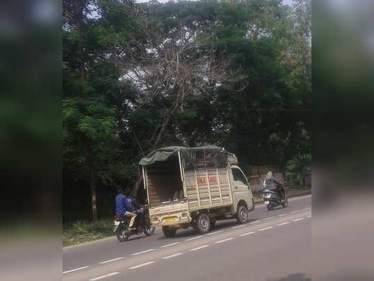 महामार्गावर वाळलेले झाड ...धोकादायक