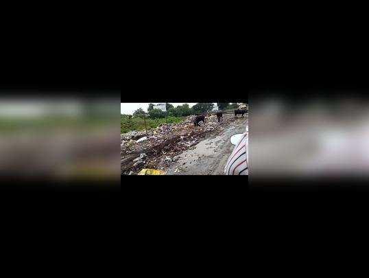 महाविद्यालयाच्या मार्गावर कचऱ्याचा ढीग