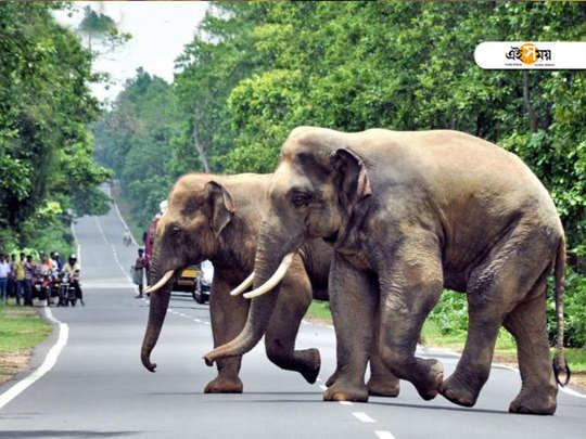 uttarakhand high court bans use of chilli powder to keep away elephant herds from crossing highway