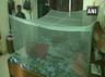 पटना में डेंगू की चपेट में आए बीजेपी विधायक नितिन नवीन, 100 नए मामले
