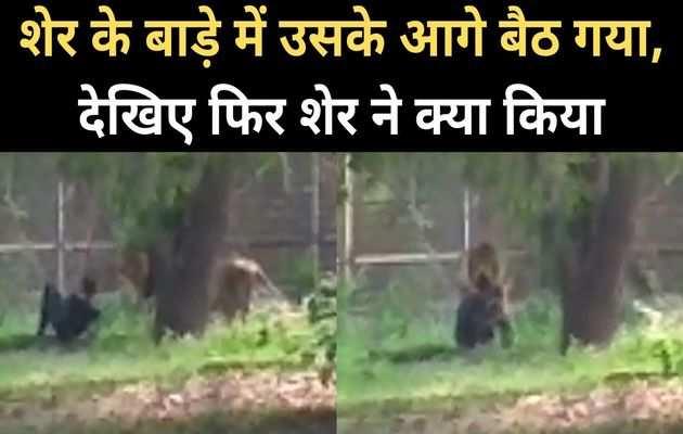 दिल्ली में शेर के बाड़े में घुस गया यह आदमी, देखिए फिर क्या हुआ