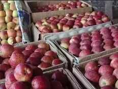 for the first time kashmiri apples have reached the arab land lulu group kept their words