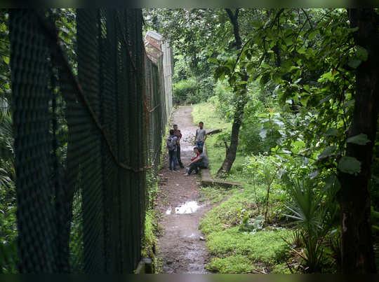 संजय गांधी उद्यानात वाघांच्या सुरक्षेसाठी सीटीटीव्ही?