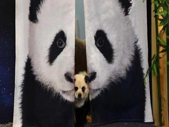 Panda_cafe-770x433