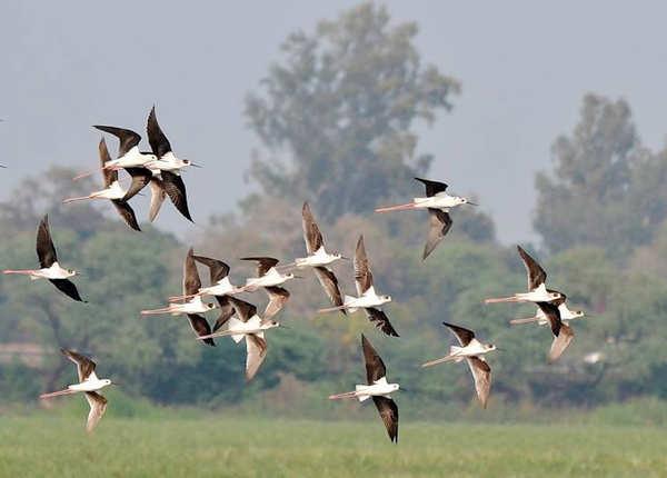 नवाबगंज पक्षी विहार, उन्नाव