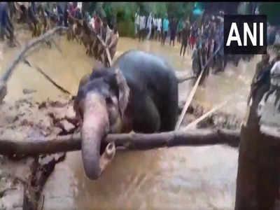 लोगों ने हाथी को अपनी जान पर खेलकर बचा ही लिया