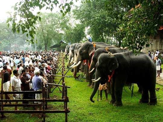 Thrissur pooram photos