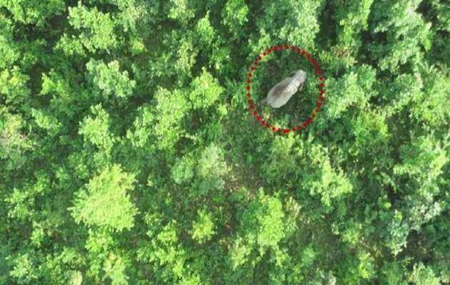 असम: पांच लोगों की जान लेने वाले हाथी का ड्रोन से पता लगाया गया