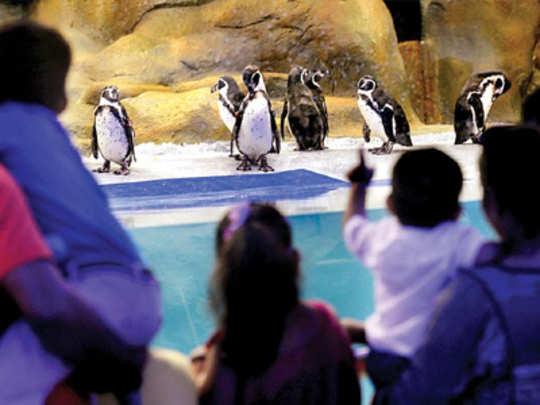 आता पेंग्विनचा आवाजही ऐका