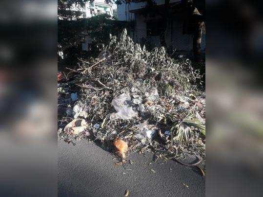कचऱ्याने नागरिकांना होतोय त्रास
