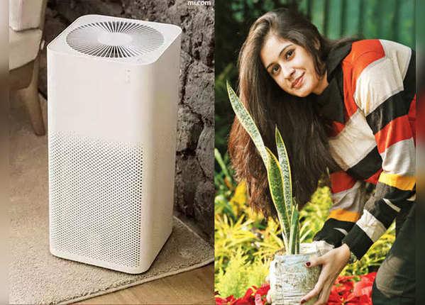 प्रदूषित हवा को शुद्ध करेंगे ये पौधे
