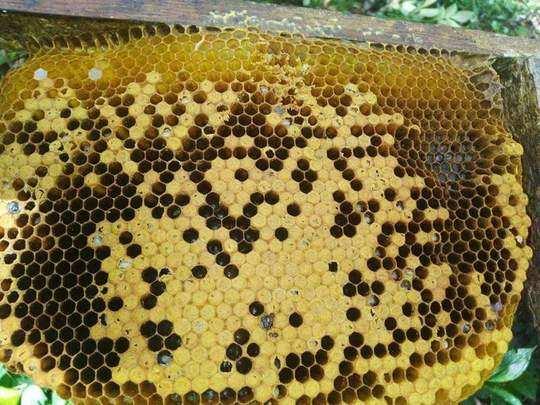 अतिवृष्टीने मध व्यवसाय उद्ध्वस्थ
