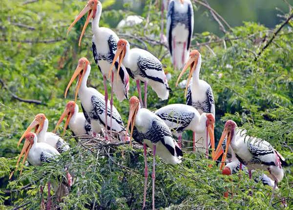 भरतपुर बर्ड सैंक्चुरी, राजस्थान