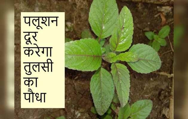 पलूशन से लड़ने में मदद करेगा तुलसी का पौधा
