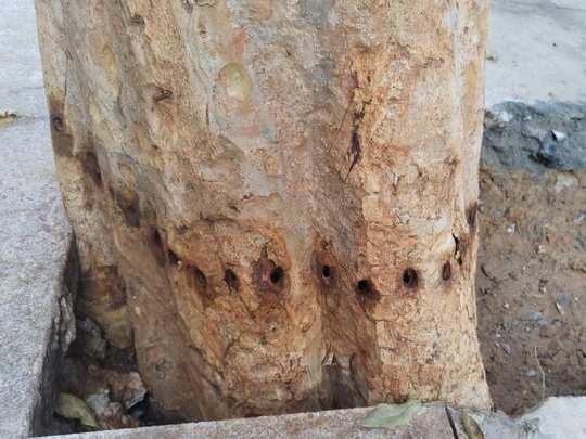 poisons tree