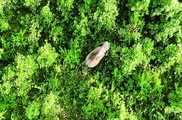 असम के जंगलों में है 'लादेन' का आतंक, एक रात में मारे 5...