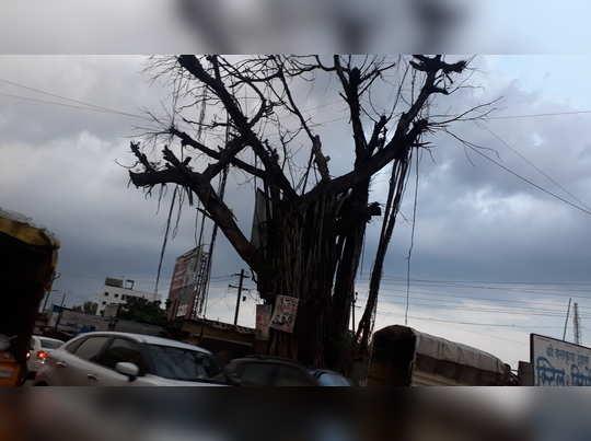 झाड धोकादायक अवस्थेत