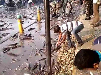 सड़क पर बिखर गईं मछलियां