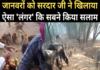 बंदरों के लिए सेबों की बरसात, विडियो वायरल