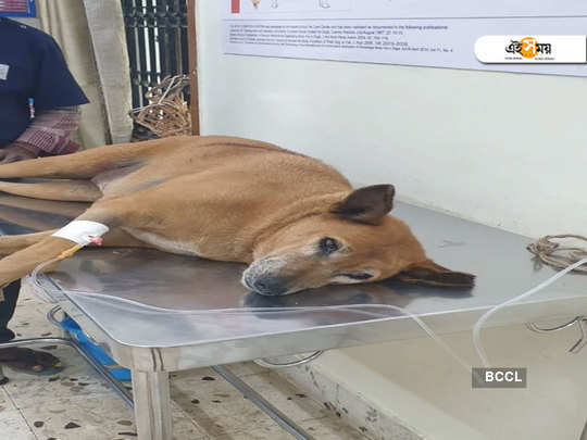 doctor shoots stray dog for too much barking, gets arrested in Bengaluru