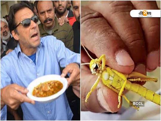 Karachi battles locust attack, Pak minister suggests eating biryani of those