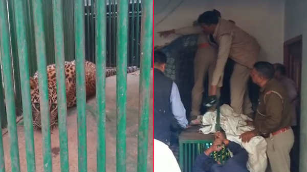 leopard enters house in dehradun rescued after several hours