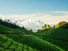tips and things to carry out for bangalore to munnar weekend trip