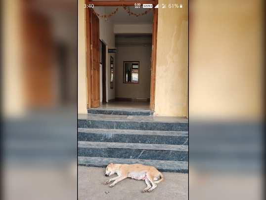 पाचोड पोलीस स्टेशन समोर श्वाननिद्रा