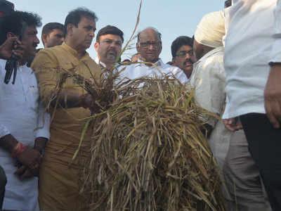 पवार ने कई क्षेत्रों के किसानों से की मुलाकात