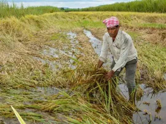 नुकसानग्रस्त शेतकऱ्यांना आर्थिक मदत जाहीर