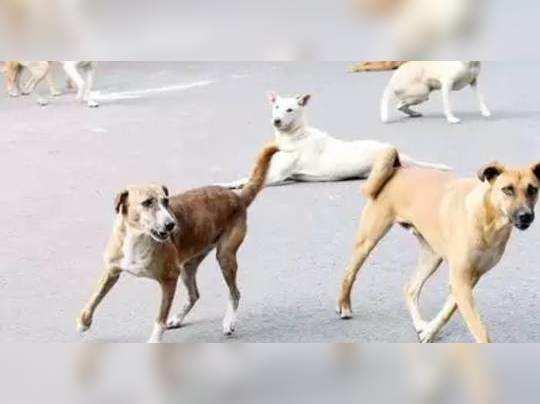 Stray dog Attack