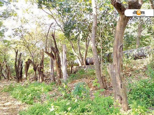 Almost 61 percent Trees transplanted in aarey colony are dead due to poor method of transplantation