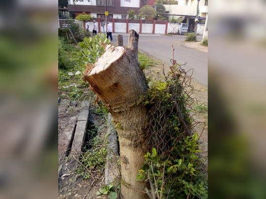 कापलेले झाड ठरतेय धोकादायक