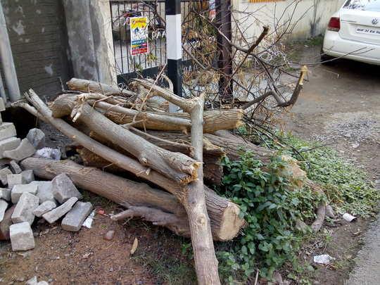 बेकायदा पद्धतीने लाकडांची तोडणी